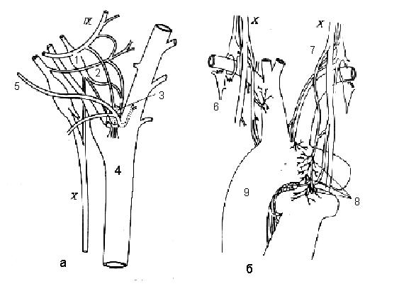 Хеморецепторы дыхательного центра реагируют на концентрацию