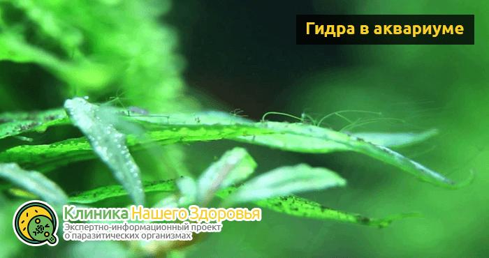 Маленькие белые червячки в доме. Нематоды в аквариуме или нашествие белых червячков! Условия разведения червей